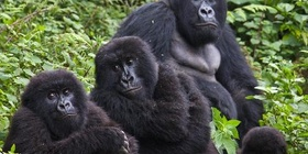 6 Days Mountain Gorillas And The Game Safari