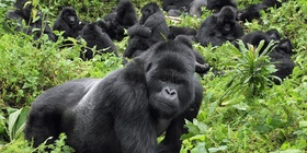 3 Days Safari To The Mountain Gorillas