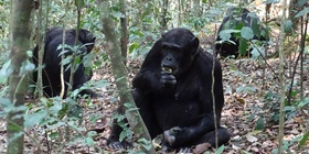 8 Days Uganda Primates Special Safari